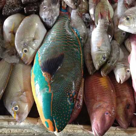 Fish Market - Hire Bali car driver for Private Tour